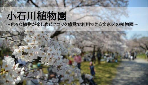 小石川植物園~色々な植物が楽しめピクニック感覚で利用できる文京区の植物園~