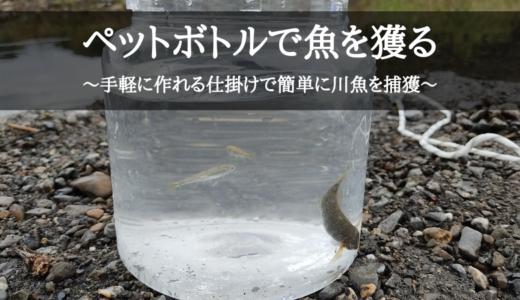 ペットボトルで魚を獲る~手軽に作れる仕掛けで簡単に川魚を捕獲~