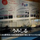 うみしる~焼津市にある静岡県水産技術研究所の展示室で小さな水族館あり~